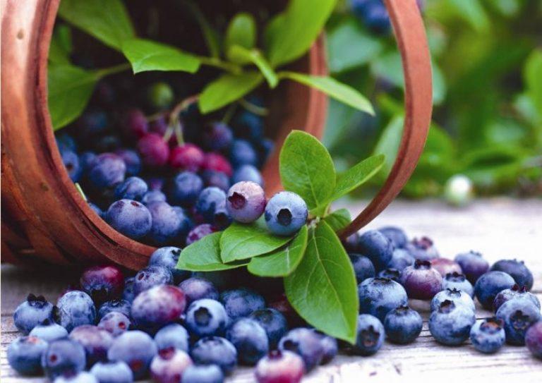 Përfitimet shëndetësore të lëngut të boronicës