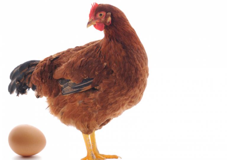Gjithçka që duhet të dini për alergjitë ndaj pulave